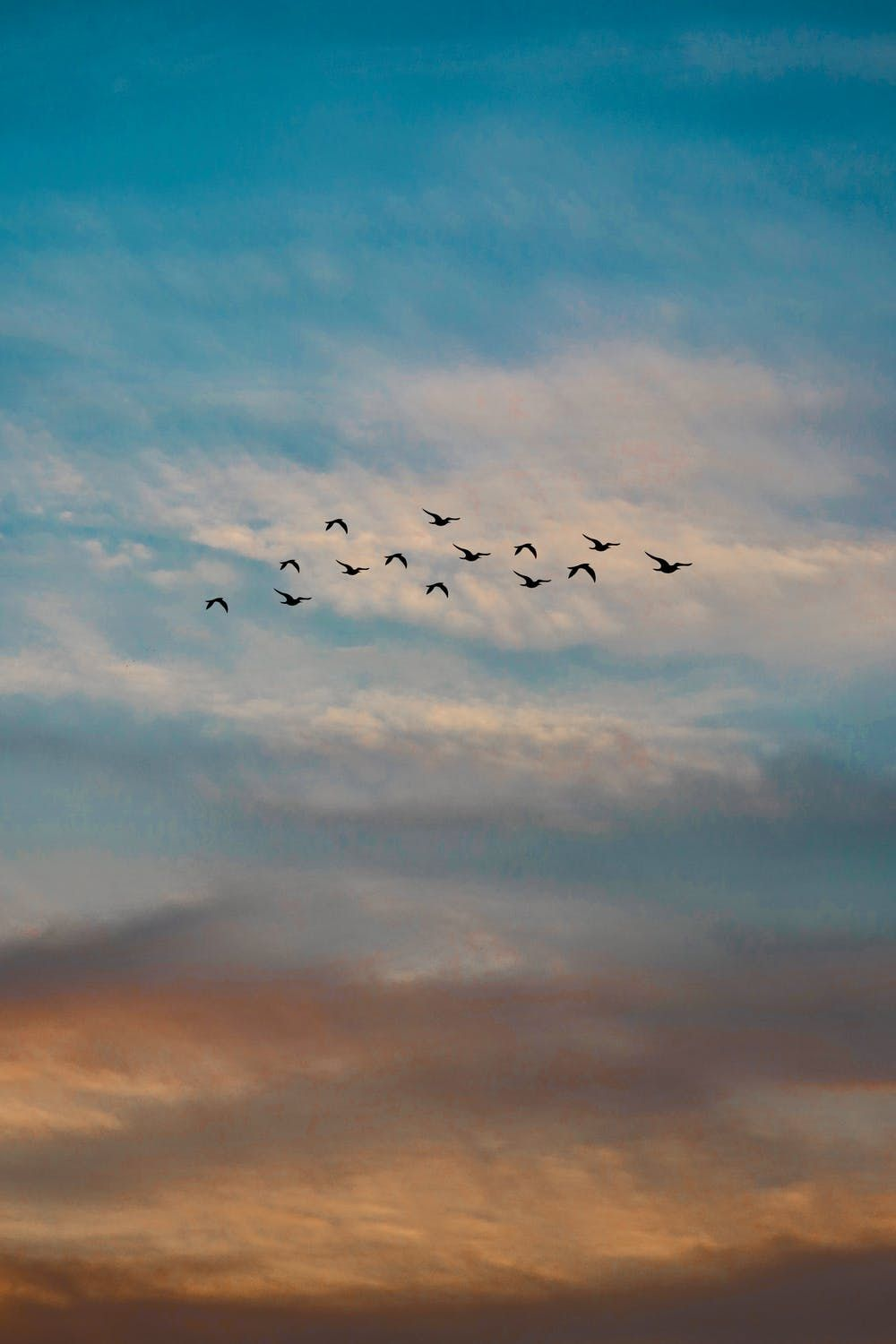 silhouettes of birds flying through blue sky