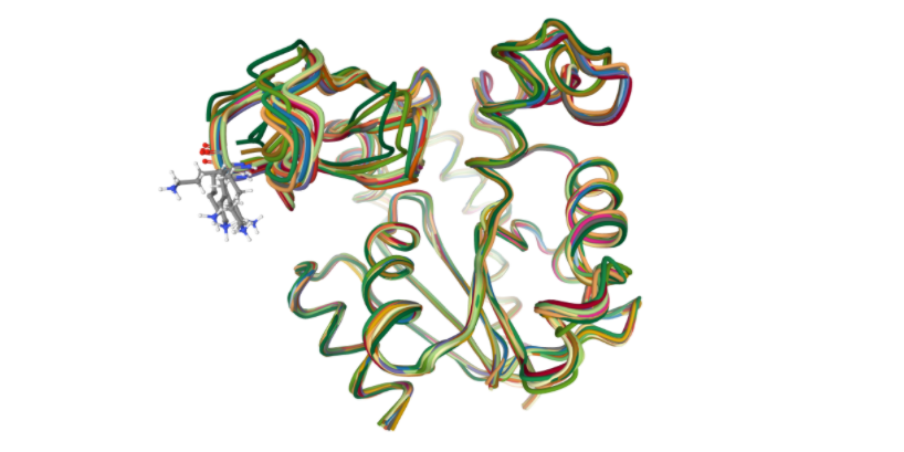 Protein Structure Similarity